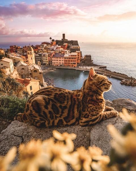 Du lịch sang chảnh cùng mèo cưng khắp chốn tiên cảnh trên thế giới - Ảnh 10.