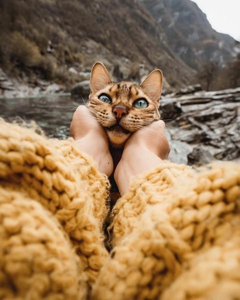 Du lịch sang chảnh cùng mèo cưng khắp chốn tiên cảnh trên thế giới - Ảnh 12.