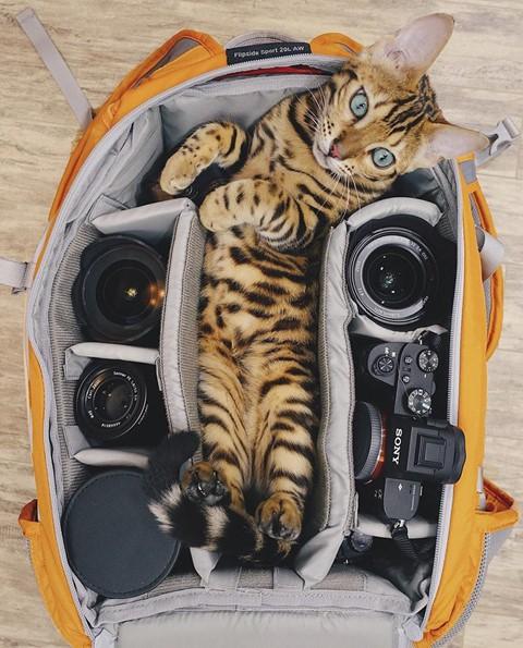 Du lịch sang chảnh cùng mèo cưng khắp chốn tiên cảnh trên thế giới - Ảnh 2.