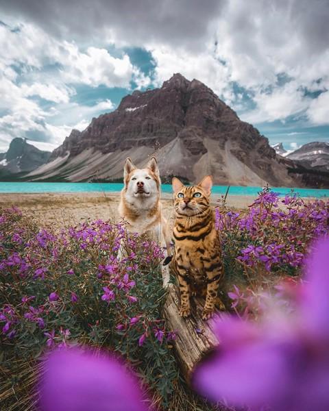 Du lịch sang chảnh cùng mèo cưng khắp chốn tiên cảnh trên thế giới - Ảnh 14.