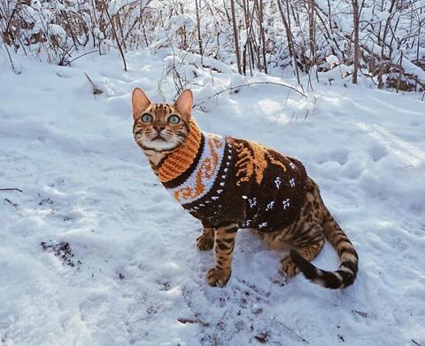 Du lịch sang chảnh cùng mèo cưng khắp chốn tiên cảnh trên thế giới - Ảnh 3.