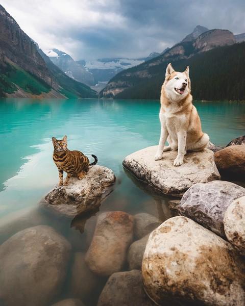 Du lịch sang chảnh cùng mèo cưng khắp chốn tiên cảnh trên thế giới - Ảnh 15.