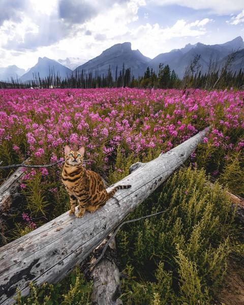 Du lịch sang chảnh cùng mèo cưng khắp chốn tiên cảnh trên thế giới - Ảnh 4.