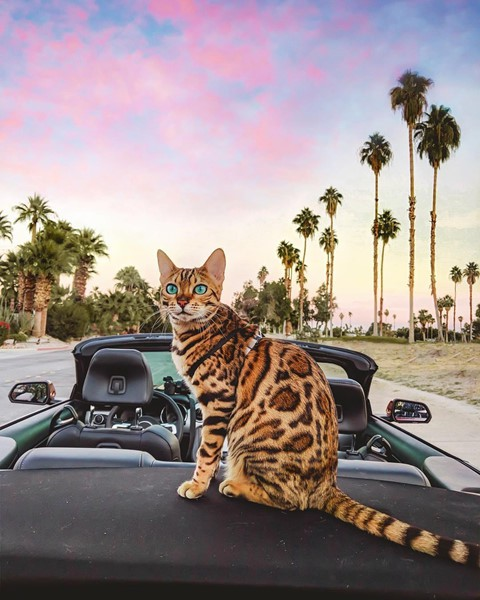 Du lịch sang chảnh cùng mèo cưng khắp chốn tiên cảnh trên thế giới - Ảnh 5.
