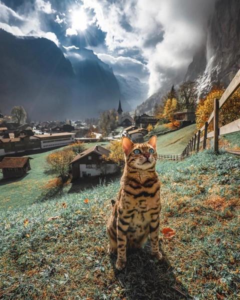 Du lịch sang chảnh cùng mèo cưng khắp chốn tiên cảnh trên thế giới - Ảnh 6.