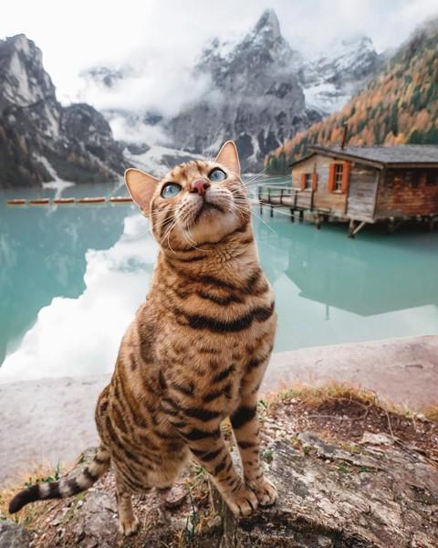 Du lịch sang chảnh cùng mèo cưng khắp chốn tiên cảnh trên thế giới - Ảnh 7.