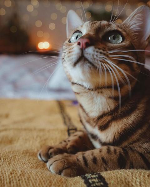 Du lịch sang chảnh cùng mèo cưng khắp chốn tiên cảnh trên thế giới - Ảnh 19.