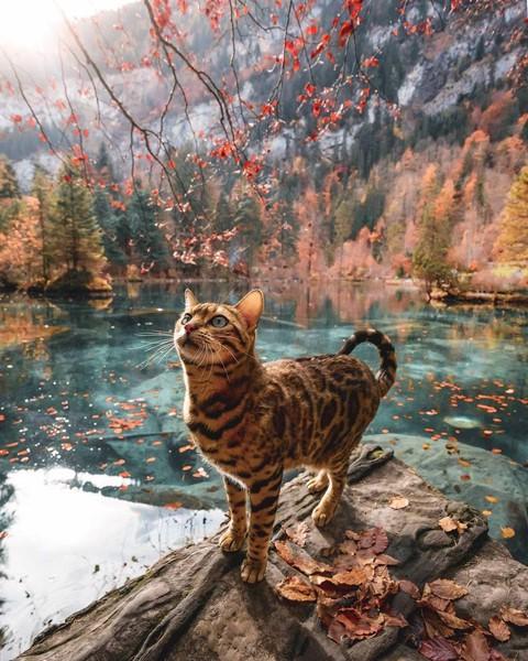 Du lịch sang chảnh cùng mèo cưng khắp chốn tiên cảnh trên thế giới - Ảnh 8.