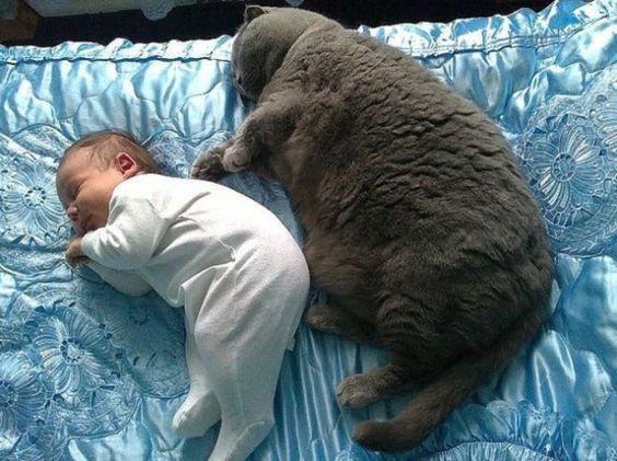 Ngắm những chú mèo béo nhưng vẫn sang chảnh nhất thế giới,  - Ảnh 7.