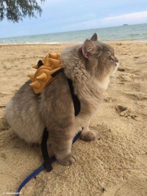 Ngắm những chú mèo béo nhưng vẫn sang chảnh nhất thế giới,  - Ảnh 2.