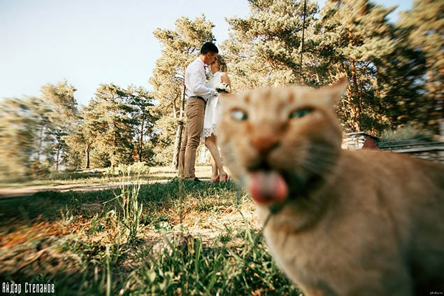 1-photobombing-cats