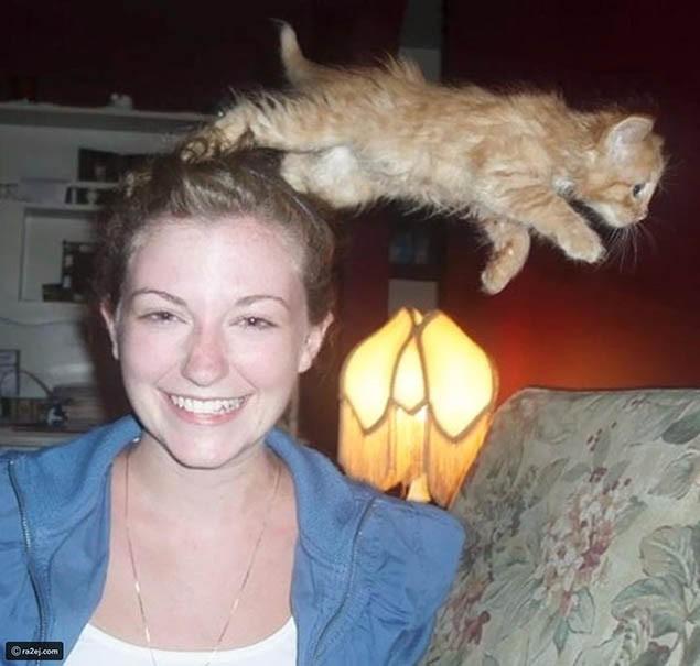 Khi chụp ảnh nên nhìn trước ngó sau bởi rất có thể những chú mèo xung quanh sẽ phá nát bức hình của bạn - Ảnh 6.