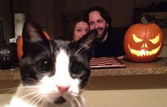 Khi chụp ảnh nên nhìn trước ngó sau bởi rất có thể những chú mèo xung quanh sẽ phá nát bức hình của bạn - Ảnh 5.