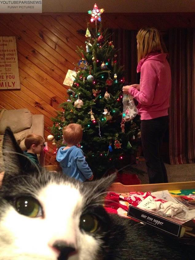 Khi chụp ảnh nên nhìn trước ngó sau bởi rất có thể những chú mèo xung quanh sẽ phá nát bức hình của bạn - Ảnh 4.