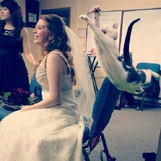 6-bride