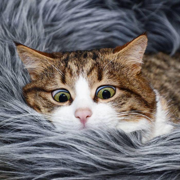 handicapped-cat-rexie-the-handicat-dasha-minaeva-18-5acb4ec22a974__700