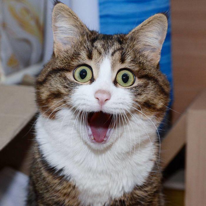 handicapped-cat-rexie-the-handicat-dasha-minaeva-48-5acb4f02de6d6__700