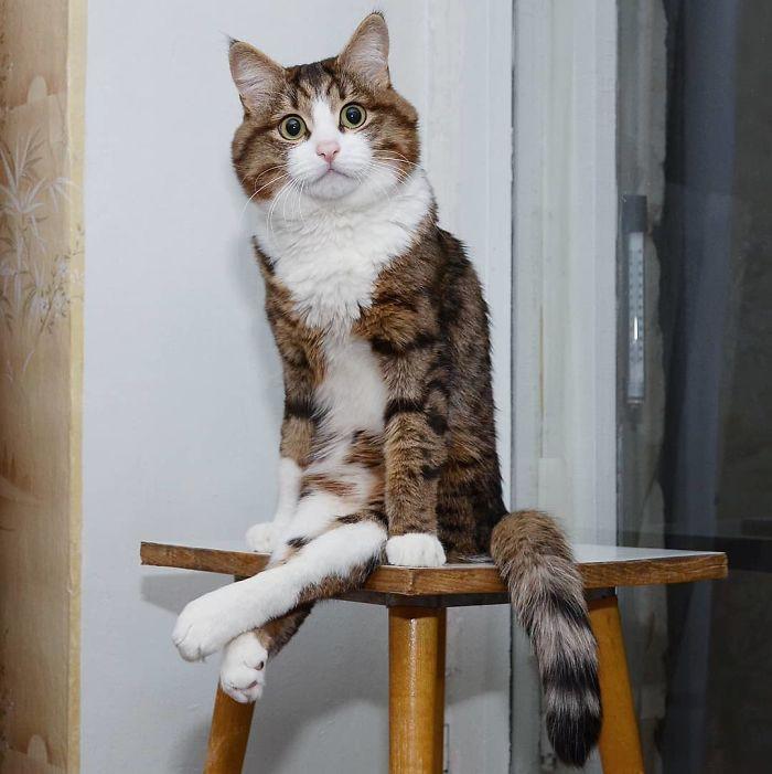 handicapped-cat-rexie-the-handicat-dasha-minaeva-5-5acb4ea520408__700