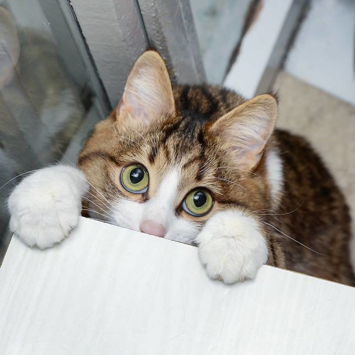 handicapped-cat-rexie-the-handicat-dasha-minaeva-60-5acb4f1d1cdbb__700