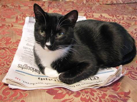 Chân dung những Cử nhân, Thạc sĩ mèo học giỏi nhất thế giới động vật  - Ảnh 5.