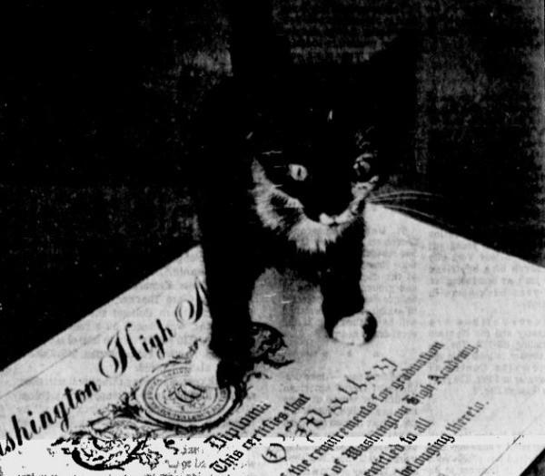 Chân dung những Cử nhân, Thạc sĩ mèo học giỏi nhất thế giới động vật  - Ảnh 4.