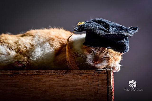 Chân dung những Cử nhân, Thạc sĩ mèo học giỏi nhất thế giới động vật  - Ảnh 1.