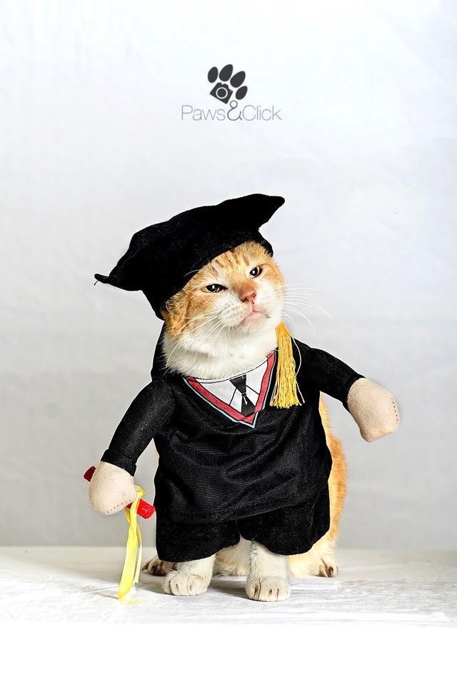 Chân dung những Cử nhân, Thạc sĩ mèo học giỏi nhất thế giới động vật  - Ảnh 2.