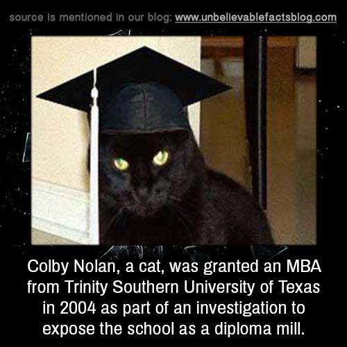 Chân dung những Cử nhân, Thạc sĩ mèo học giỏi nhất thế giới động vật  - Ảnh 3.