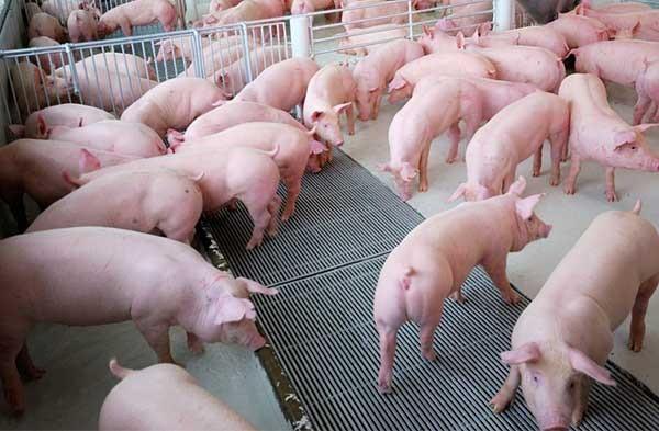 Lượng thịt tiêu thụ nhiều nơi giảm 50% do dịch tả lợn châu Phi - Ảnh 1.