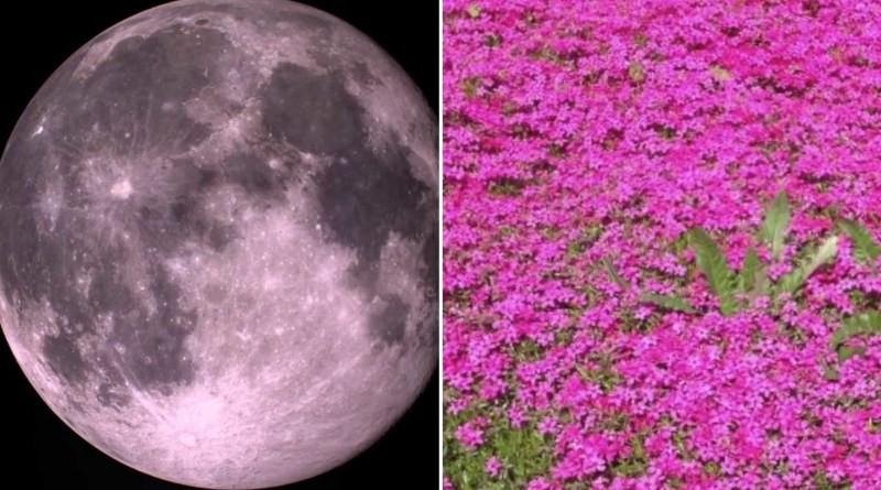Giải mã hiện tượng mặt trăng hồng chỉ xuất hiện trong dịp lễ Phục sinh - Ảnh 1.