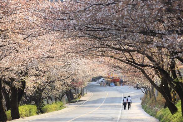 Hàn Quốc mở Trung tâm xin visa tại TP HCM - Ảnh 1.