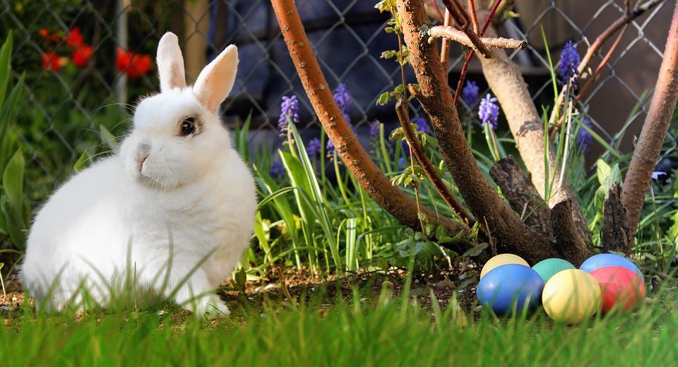 Đi tìm lời giải về biểu tượng trứng và thỏ trong ngày lễ Phục sinh - Ảnh 6.
