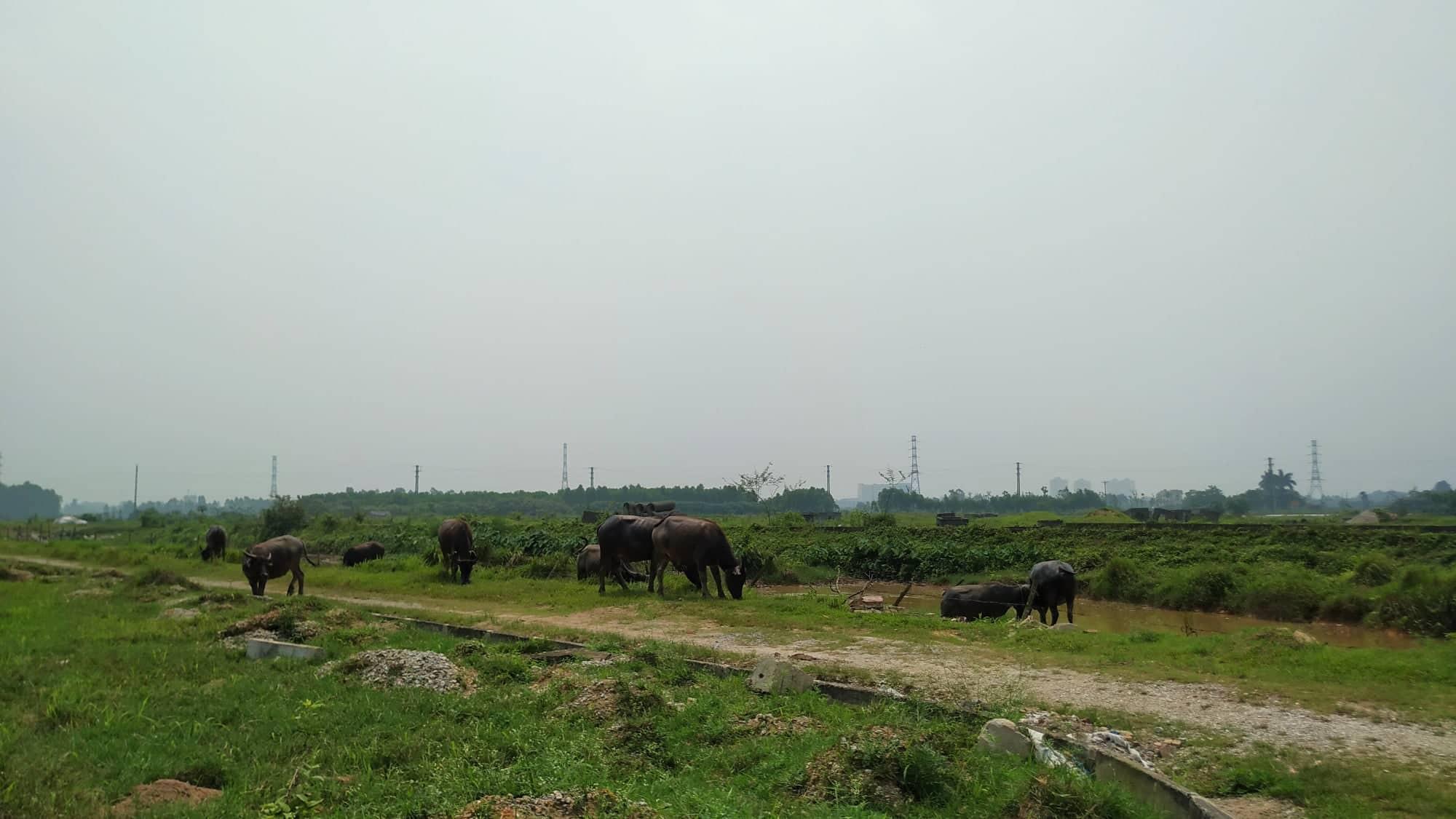Sau 10 năm xây dựng, 2.000 ha đất hoang tàn, bỏ hoang tại Mê Linh - Ảnh 5.