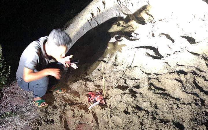 Hưng Yên: Bé trai 7 tuổi bị hàng chục con chó lao vào tấn công