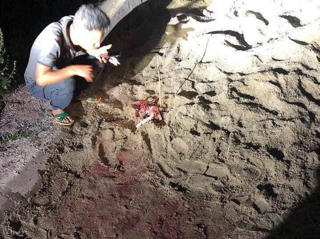 Cháu bé bị đàn cho hung dữ cắn ở Hưng Yên đã tử vong do vết thương quá nặng - Ảnh 1.