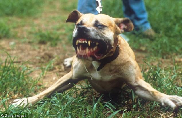Bé trai 7 tuổi bị đàn chó tấn công: Vì sao mục tiêu của chó thường là trẻ em? - Ảnh 1.