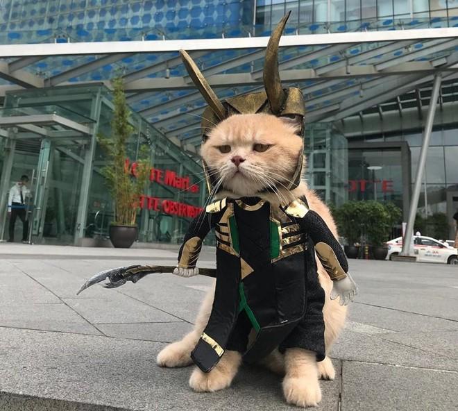 Chú mèo tên Chó lại gây cười khi hóa thân thành anh hùng Avengers - Ảnh 1.