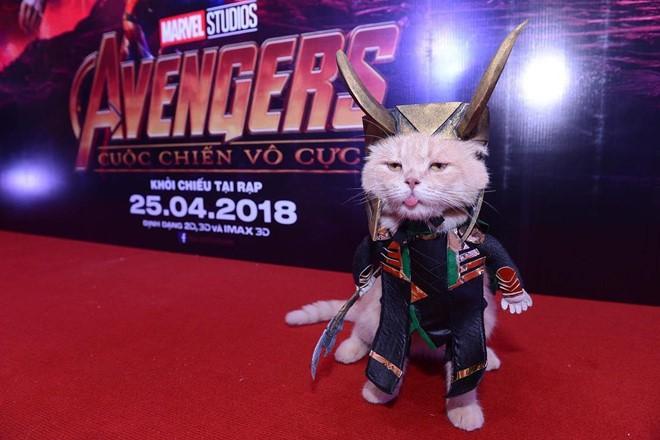 Chú mèo tên Chó lại gây cười khi hóa thân thành anh hùng Avengers - Ảnh 10.