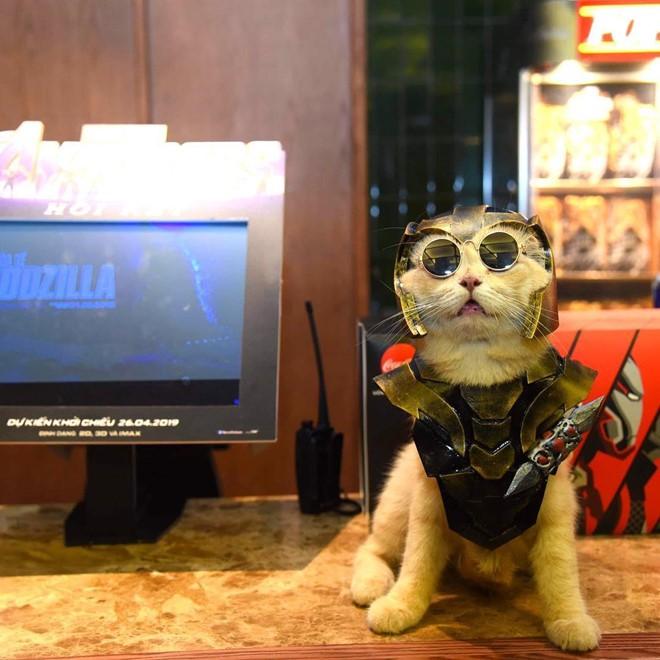 Chú mèo tên Chó lại gây cười khi hóa thân thành anh hùng Avengers - Ảnh 2.