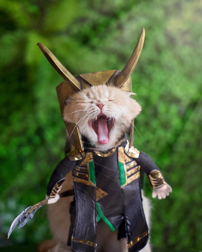 Chú mèo tên Chó lại gây cười khi hóa thân thành anh hùng Avengers - Ảnh 4.