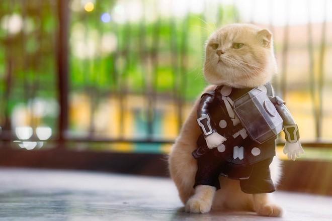 Chú mèo tên Chó lại gây cười khi hóa thân thành anh hùng Avengers - Ảnh 5.