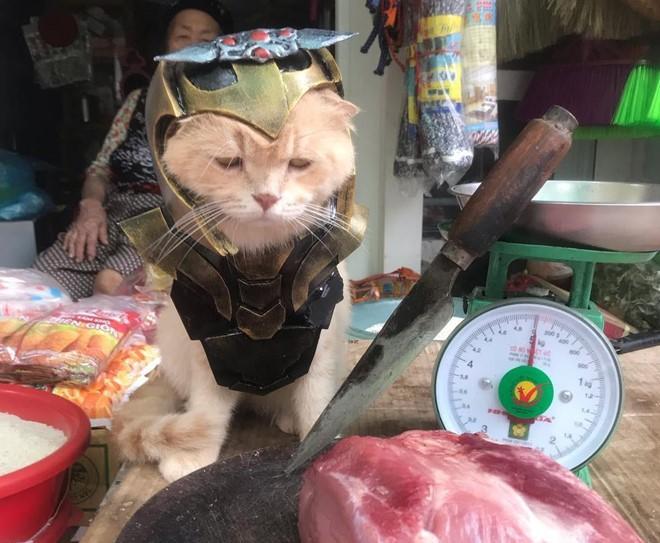 Chú mèo tên Chó lại gây cười khi hóa thân thành anh hùng Avengers - Ảnh 6.