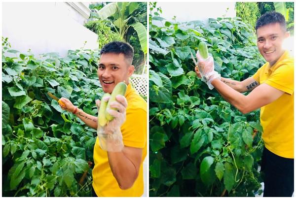 Sao Việt hôm nay (10/5): Công Vinh bán dưa sạch của nhà trồng được với giá trên trời, Hari Won muốn làm đàn ông - Ảnh 7.