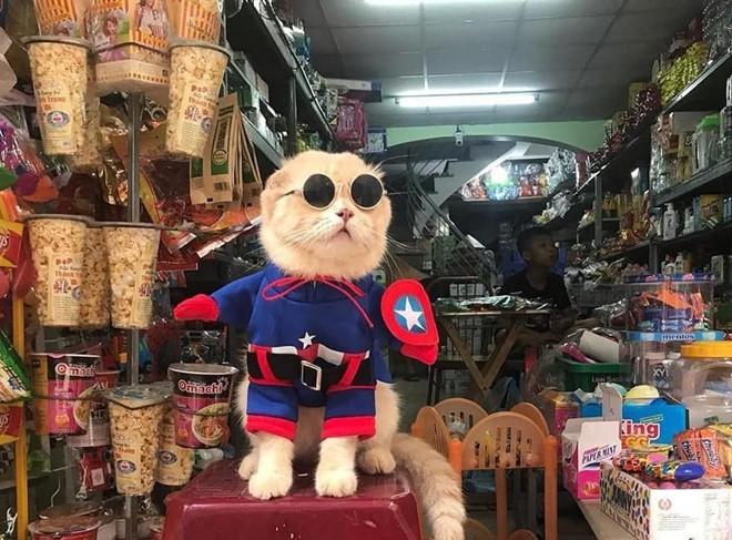 Chú mèo tên Chó lại gây cười khi hóa thân thành anh hùng Avengers - Ảnh 8.