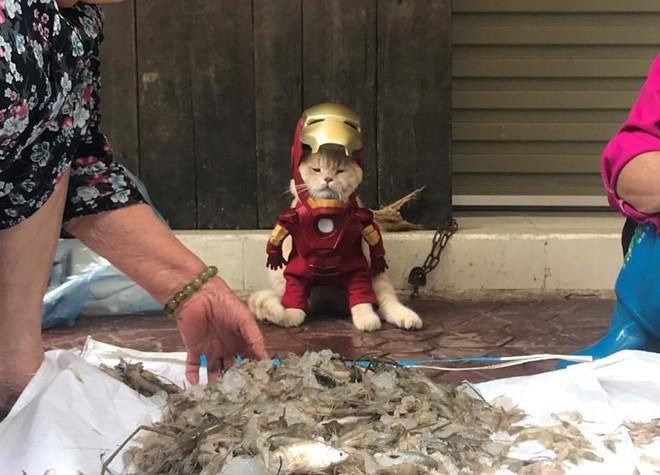 Chú mèo tên Chó lại gây cười khi hóa thân thành anh hùng Avengers - Ảnh 9.
