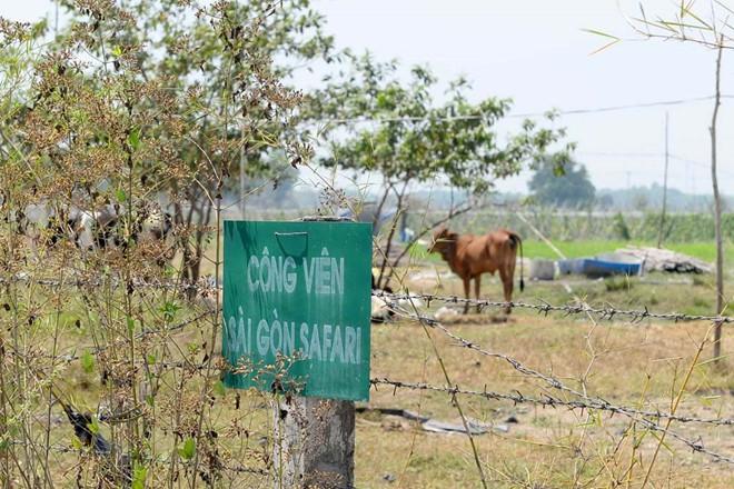 Dự án công viên Saigon Safari nửa tỉ USD: Trâu bò gặm cỏ suốt 15 năm - Ảnh 1.