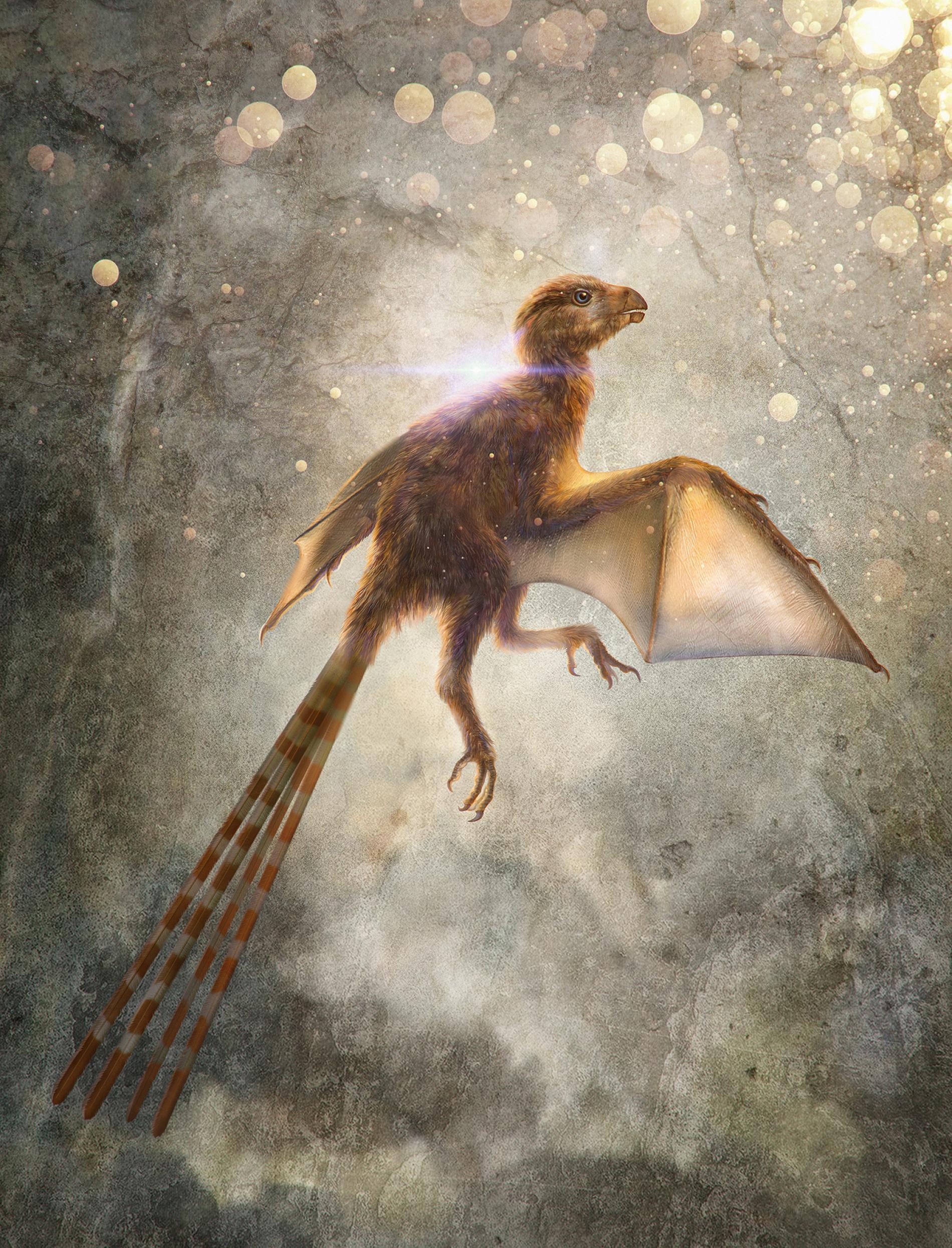 Trung Quốc: Phát hiện hóa thạch loài khủng long cánh rồng - Ảnh 6.