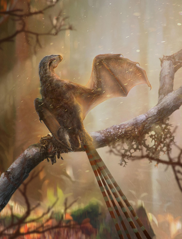 Trung Quốc: Phát hiện hóa thạch loài khủng long cánh rồng - Ảnh 5.