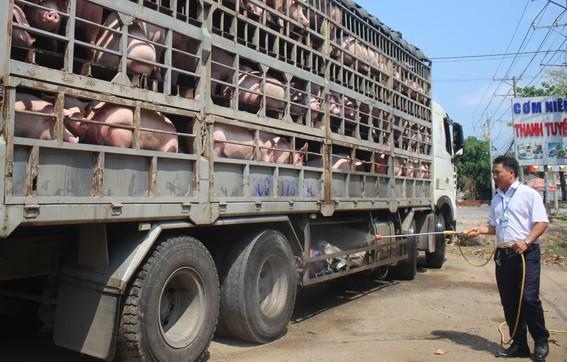 TP HCM lo ngại thiếu thịt heo khi dịch tả châu Phi đã xảy ra tại Đồng Nai - Ảnh 2.