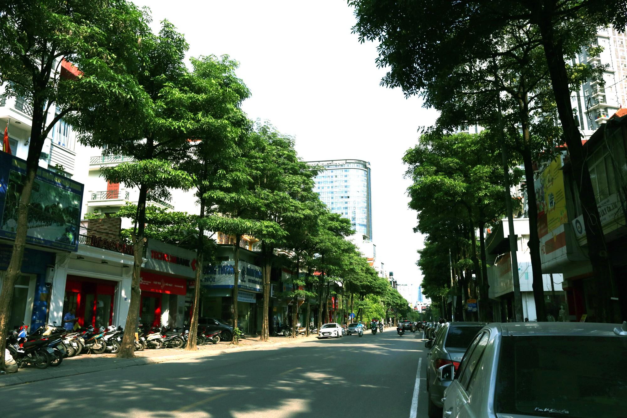 Hà Nội: Đầu hè, hoa sữa bất ngờ nở trên nhiều tuyến phố  - Ảnh 1.